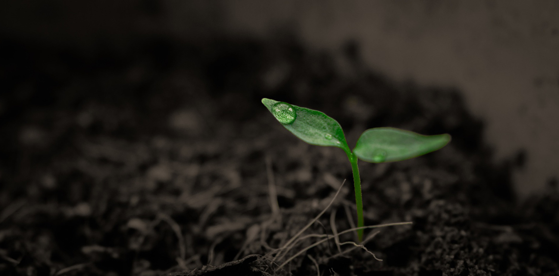 drop-plant